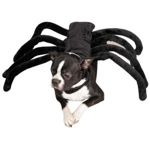 Costume araignée pour chien