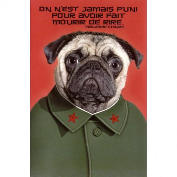 Carte Pet, Chien Mao Zedong