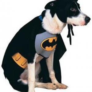 Costume Batman pour chien