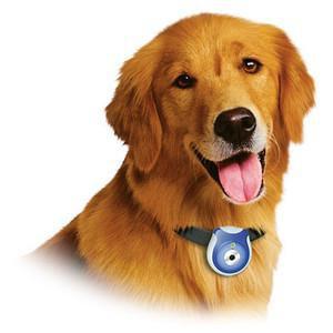 Appareil photo pour chien