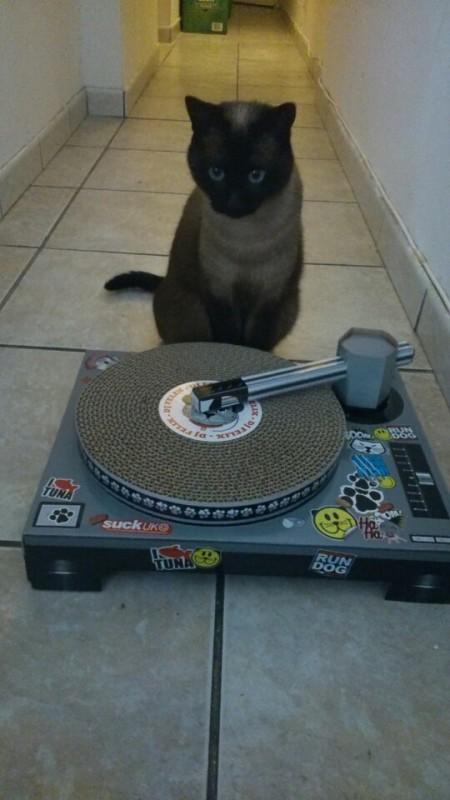 griffoir chat dj