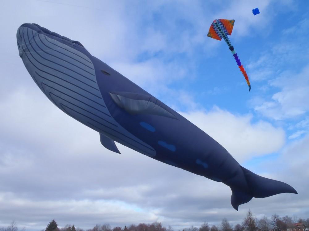 http://cdn.commentseruiner.net/9814-thickbox_default/cerf-volant-baleine-bleue-taille-reelle-geante.jpg